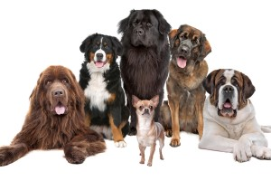 dog wallpaper breeds
