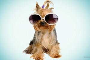 dog wallpaper cool