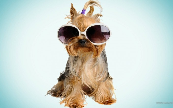 dog wallpaper cool