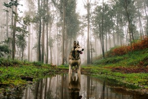 dog wallpaper nature