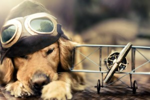 dog wallpaper photography
