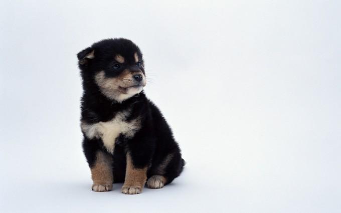 dog wallpaper puppy cute