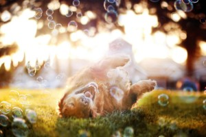 dog wallpapers bubbles