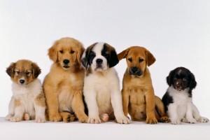 dog wallpapers cute desktop