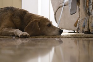 dog wallpapers floor