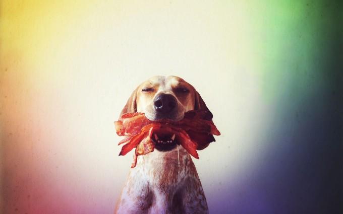 dog wallpapers food