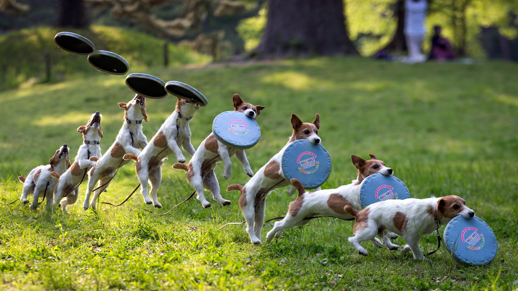dog wallpapers frisbee