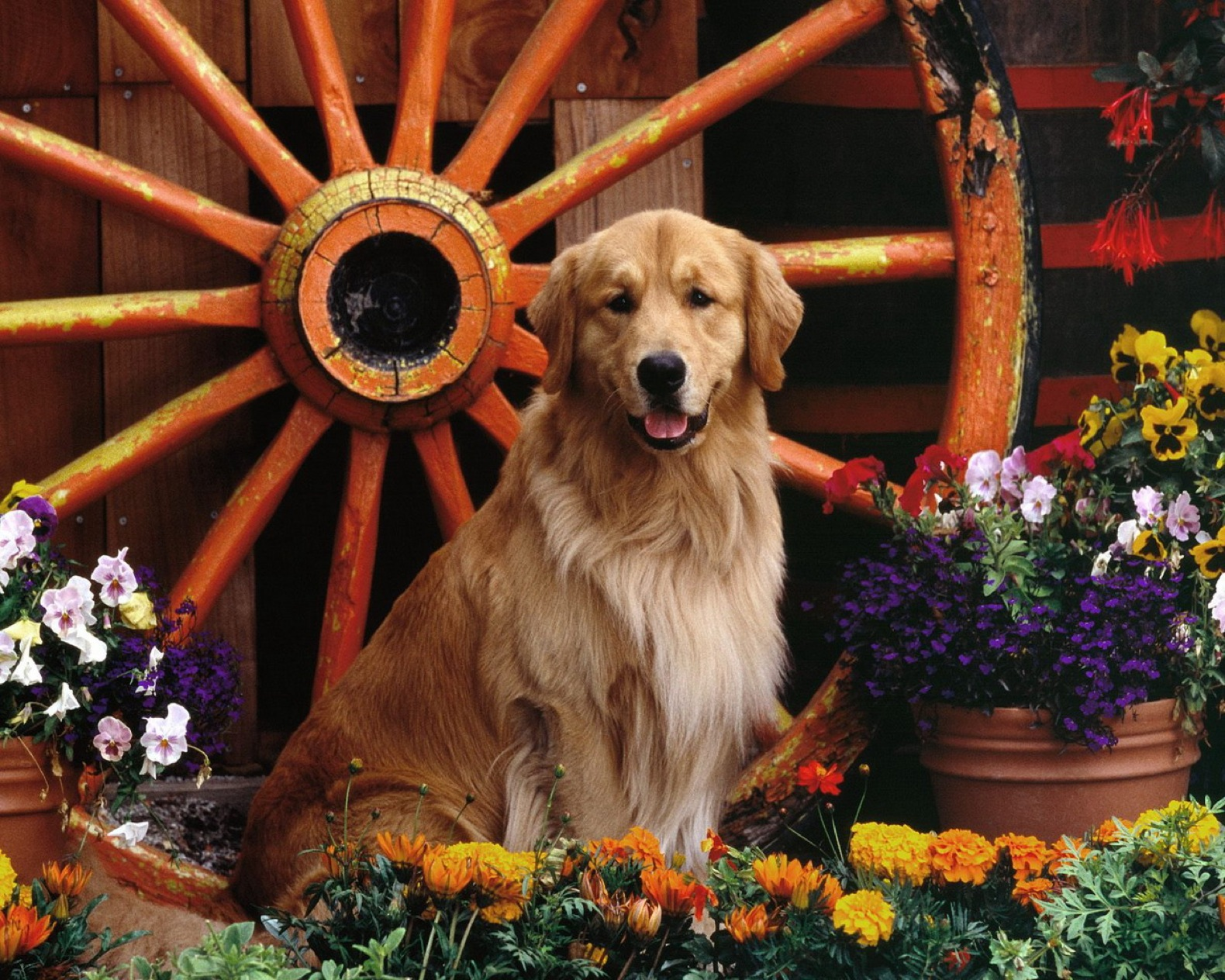 dog wallpapers full hd