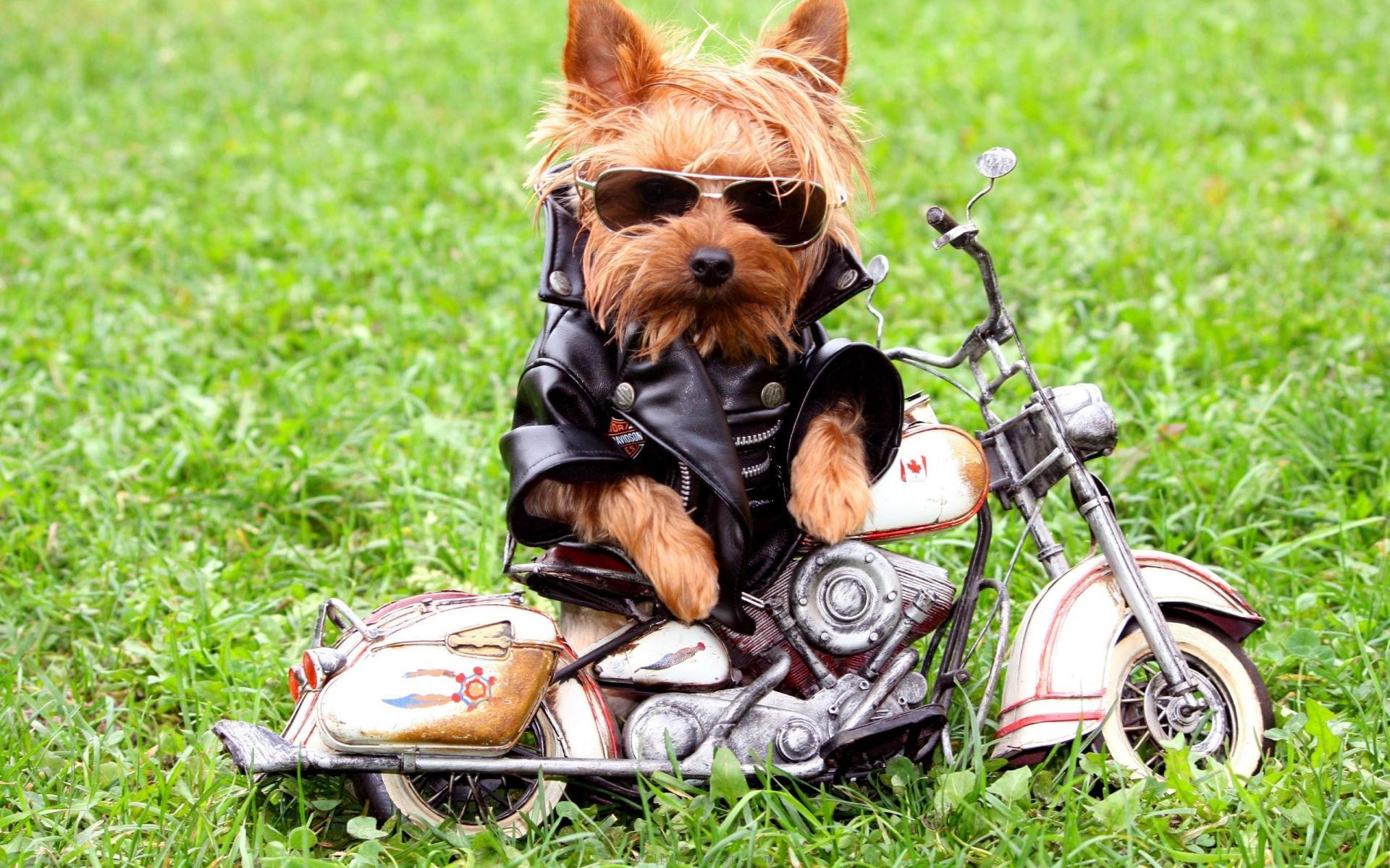 dog wallpapers funny cool