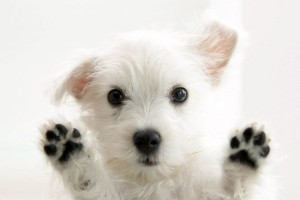 dog wallpapers glass
