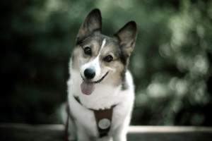 dog wallpapers happy