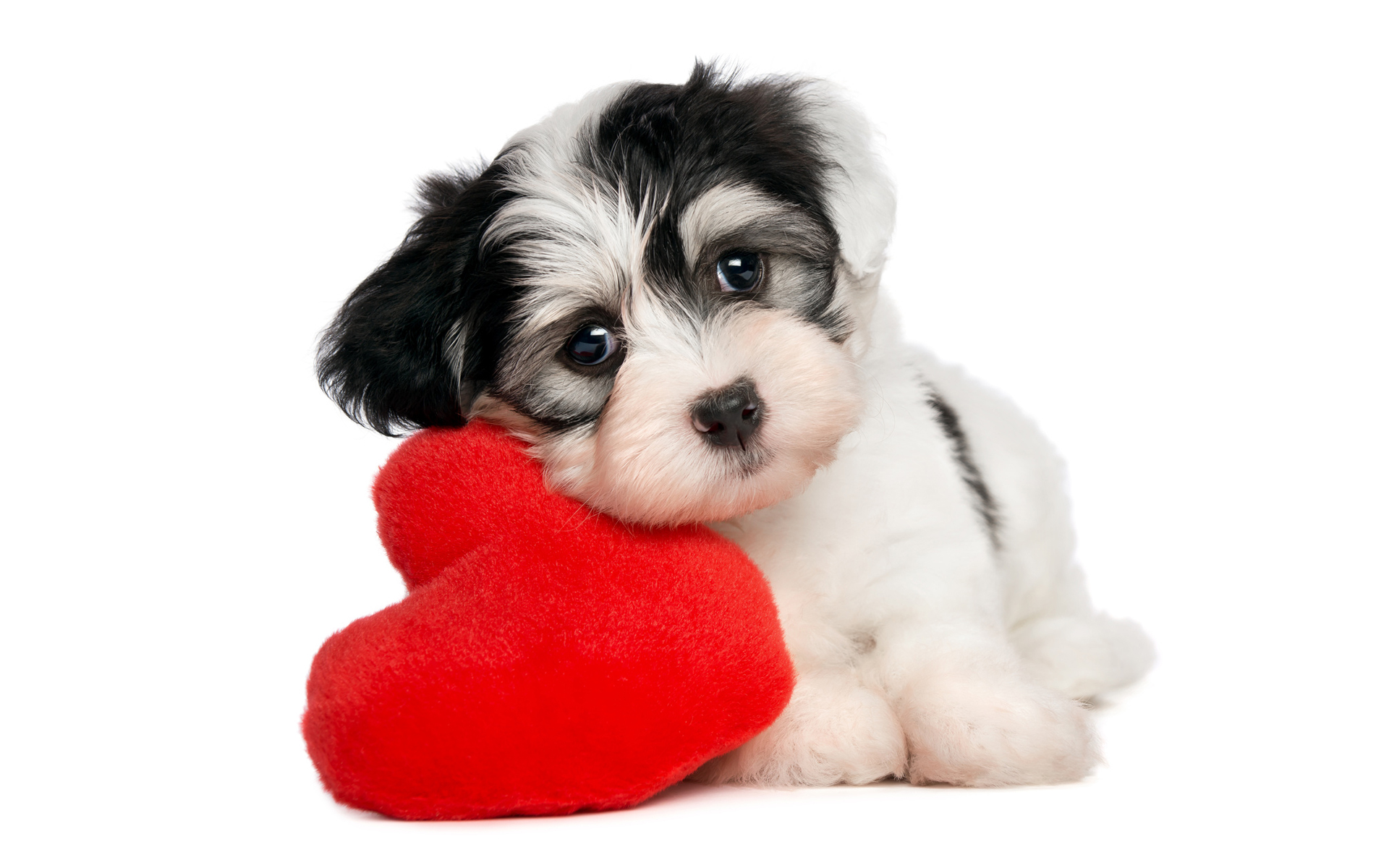 dog wallpapers heart