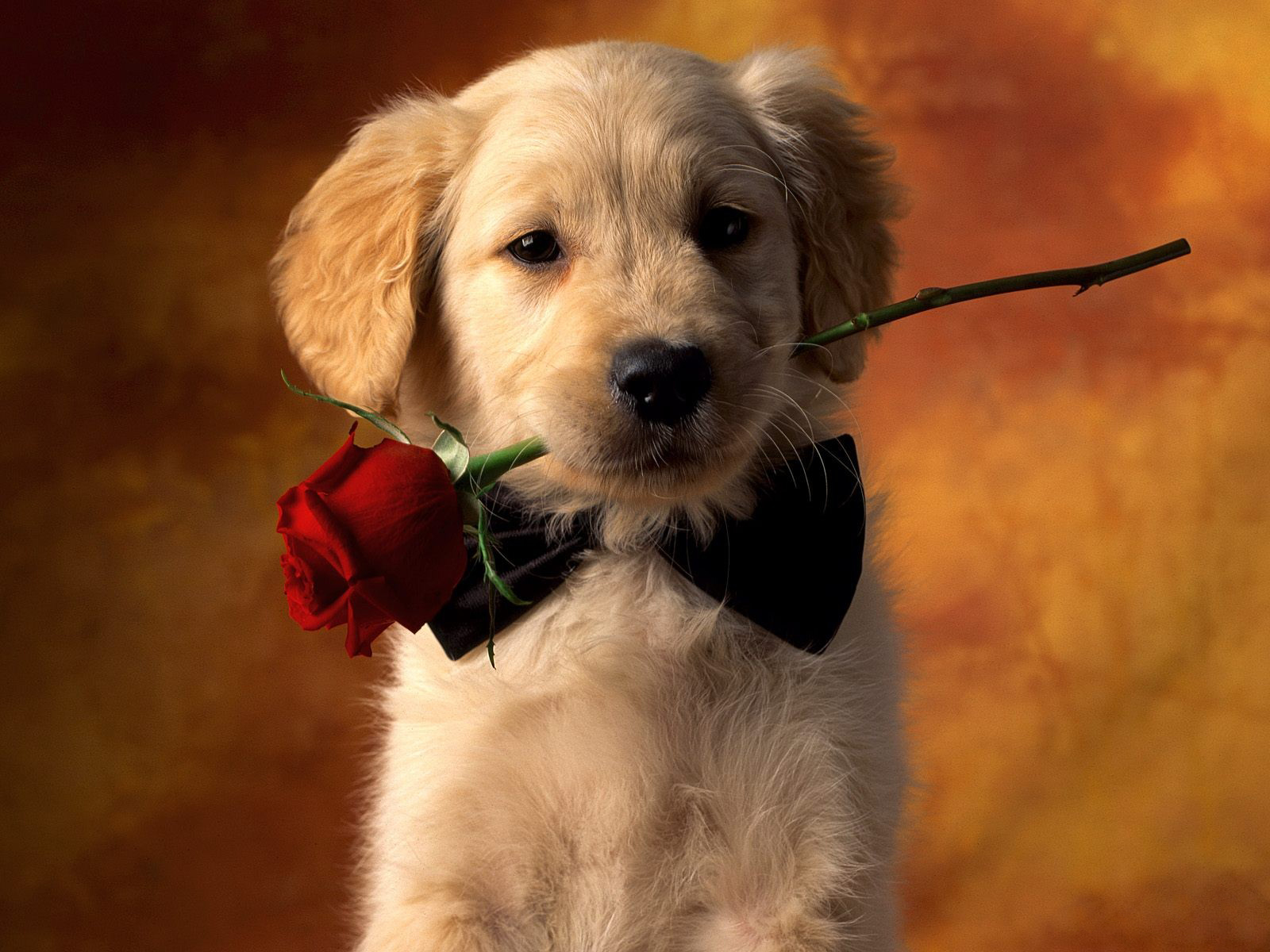 dog wallpapers love
