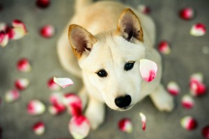 dog wallpapers magnificent