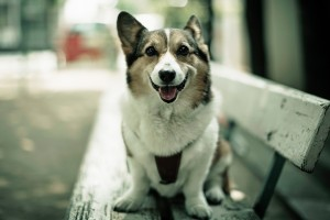 dog wallpapers sitting