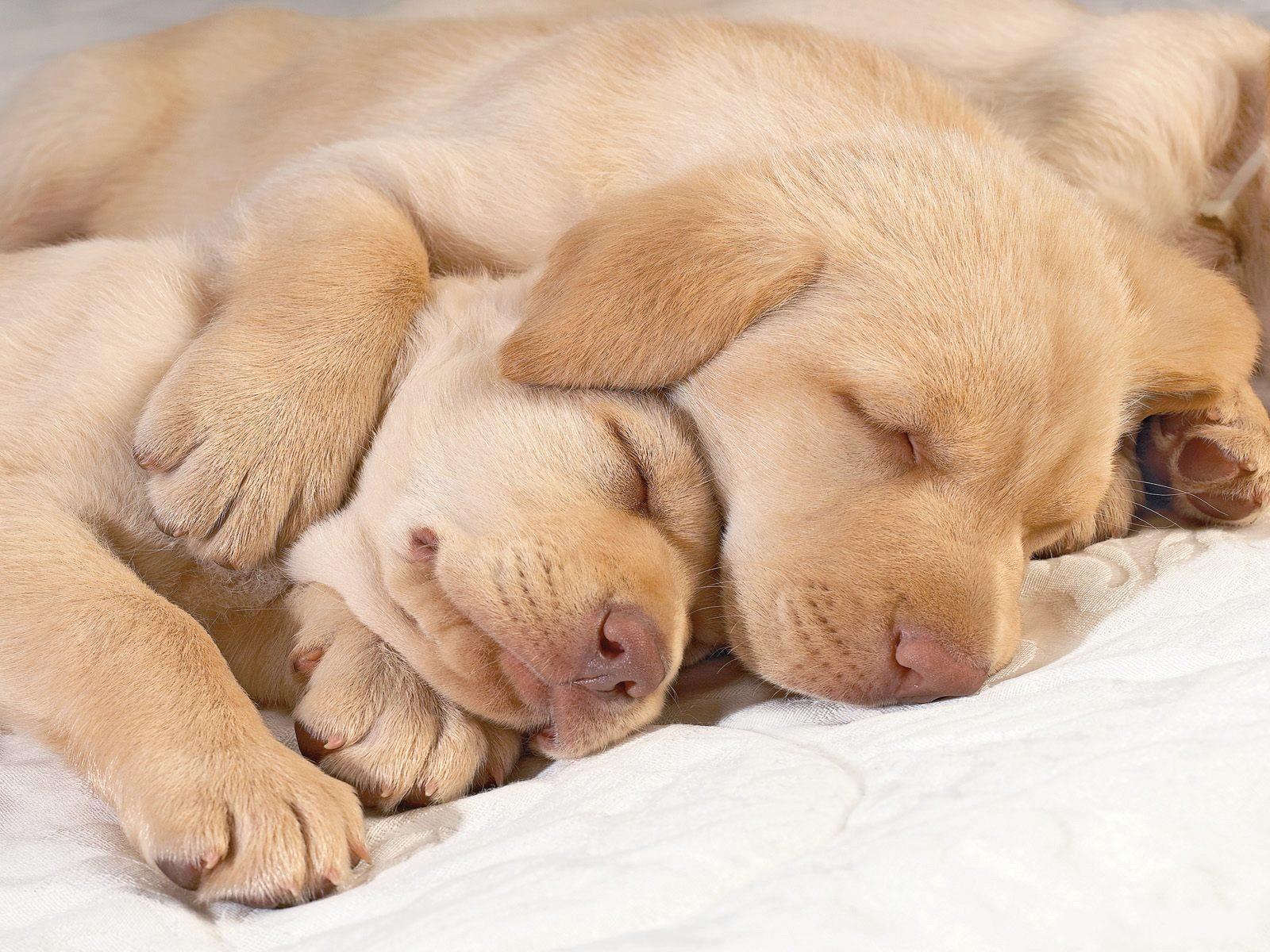 dog wallpapers sleep