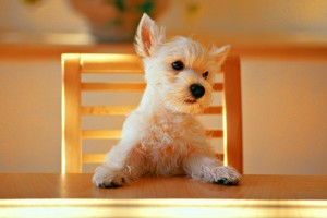 dog wallpapers splendid