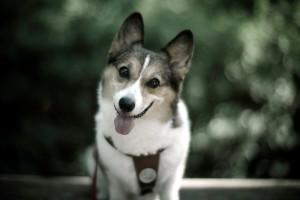 dog wallpapers stunning