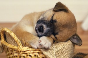 dog wallpapers sweet