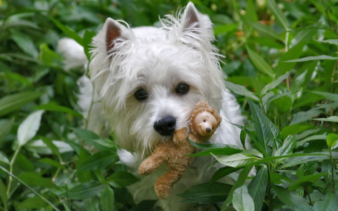 dog wallpapers toy