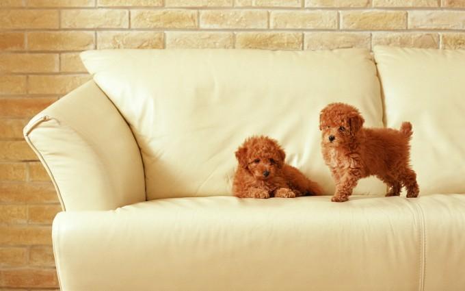 dog wallpapers widescreen