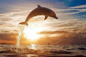 dolphin photos