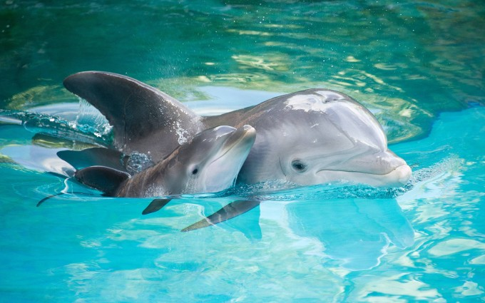 dolphin wallpaper baby