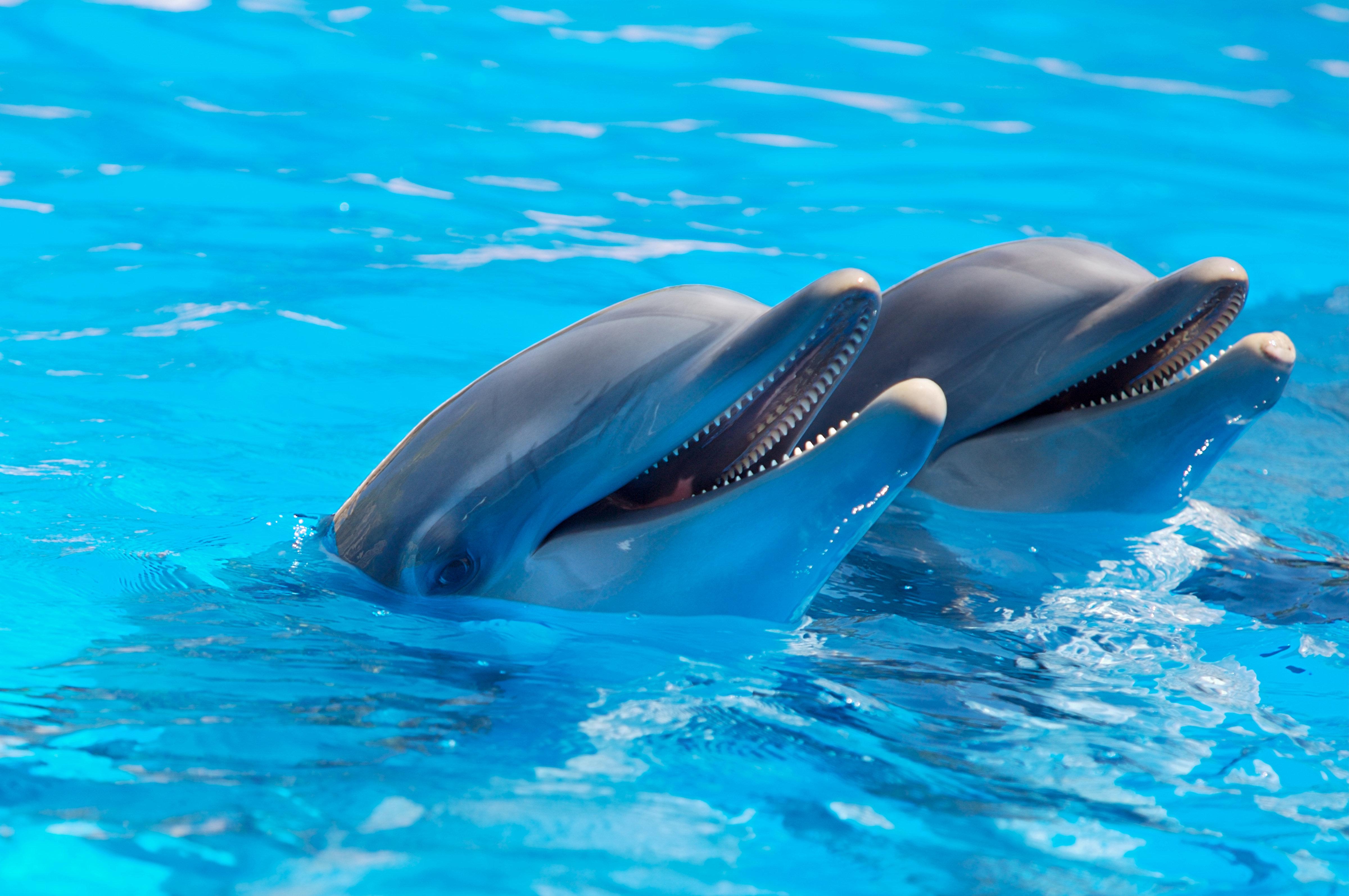 dolphin wallpaper couple