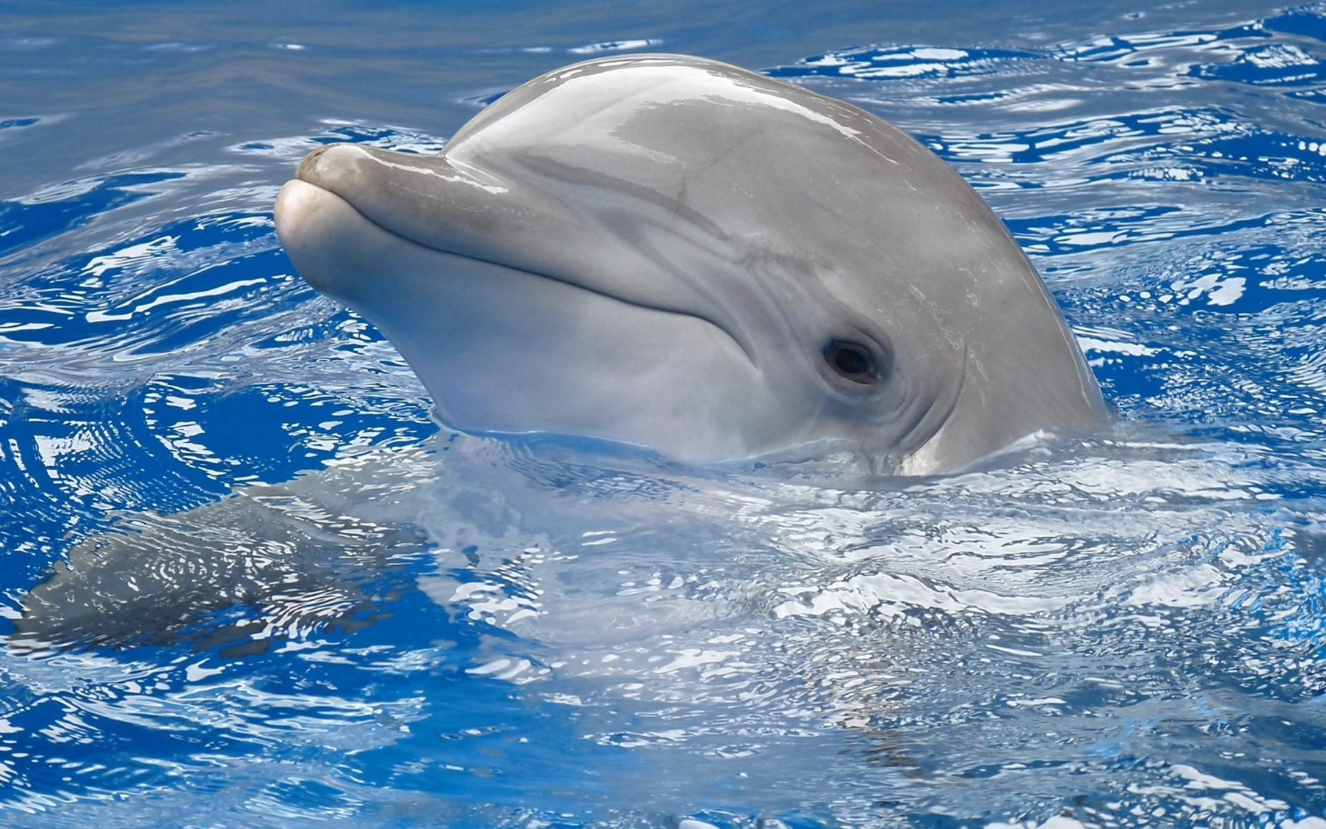 dolphin wallpaper desktop aa