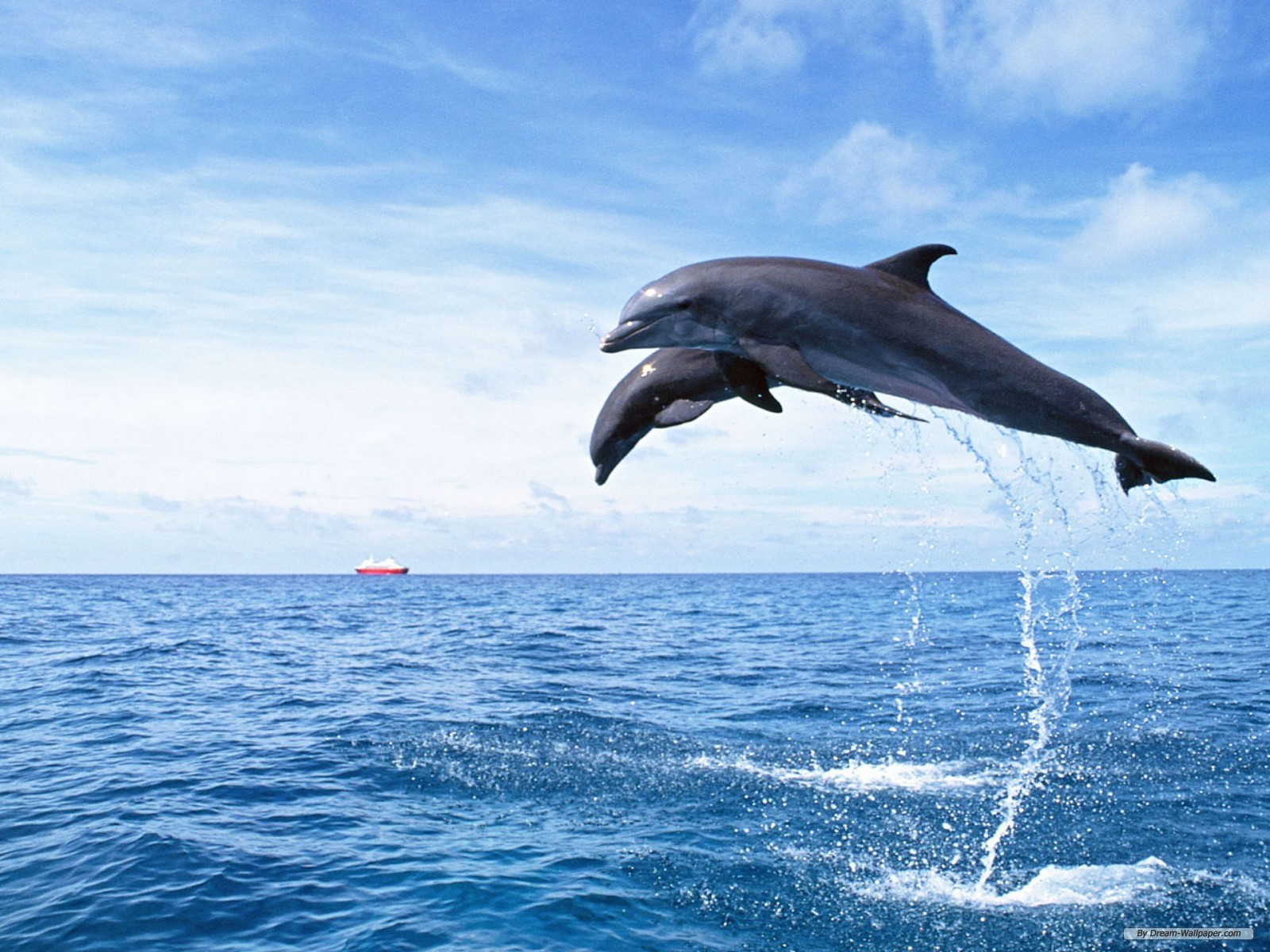 Photo Collection Dolphin Hd Wallpaper 3