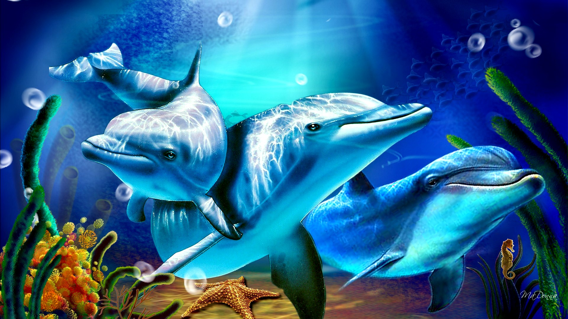 dolphin wallpaper image