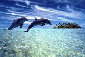 dolphin wallpaper island