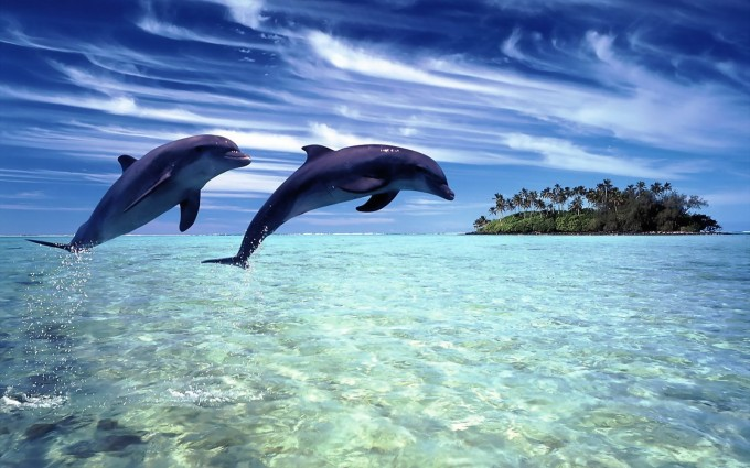 dolphin wallpaper island