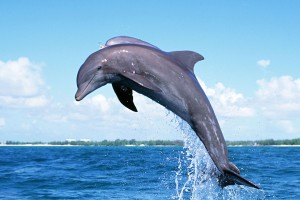 dolphin wallpaper jump