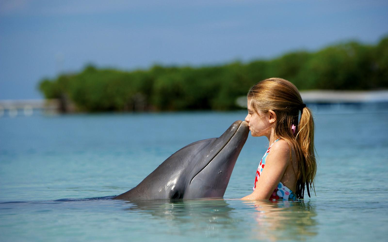 dolphin wallpaper kid