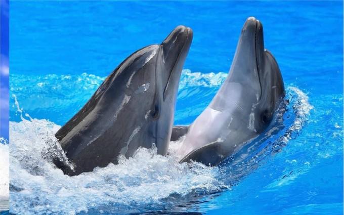 dolphin wallpaper love