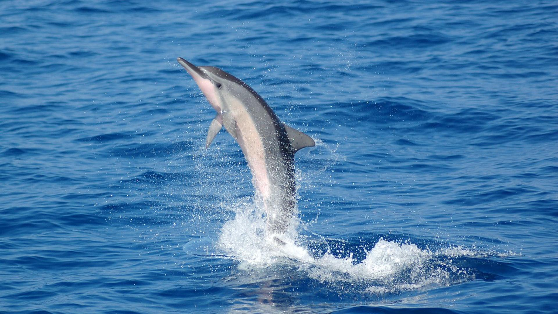 dolphin wallpaper magnificent