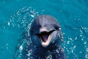 dolphin wallpaper nice