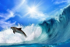 dolphin wallpaper ocean