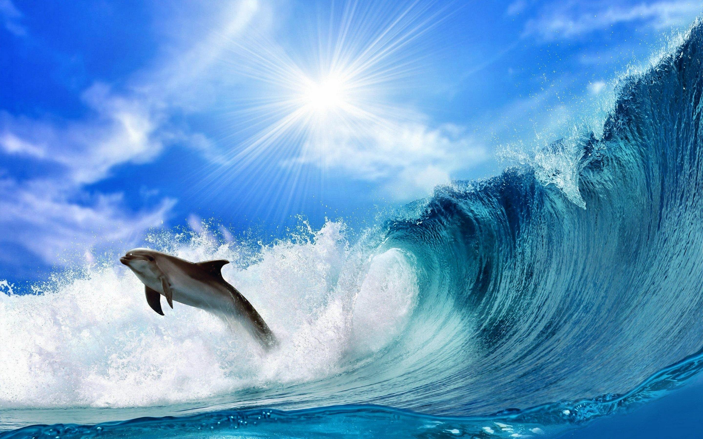 dolphin wallpaper ocean