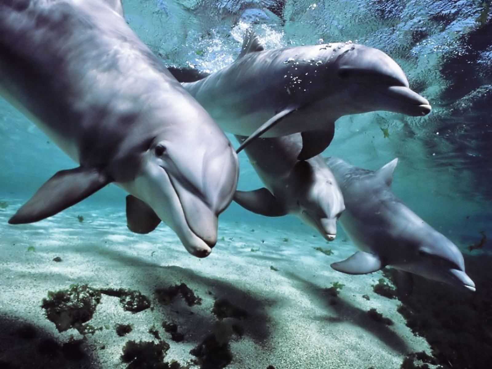 dolphin wallpaper underground