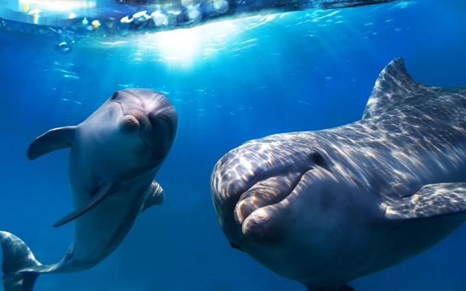 dolphin wallpaper underwater