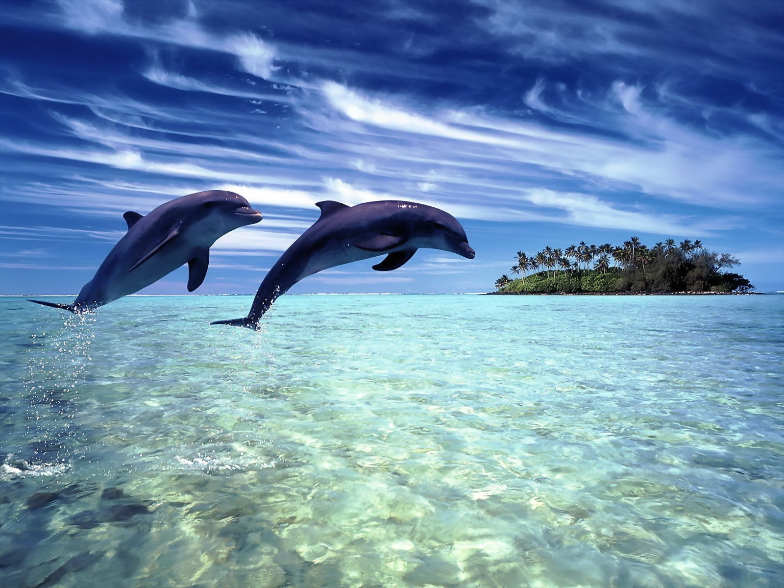 dolphin wallpaper water