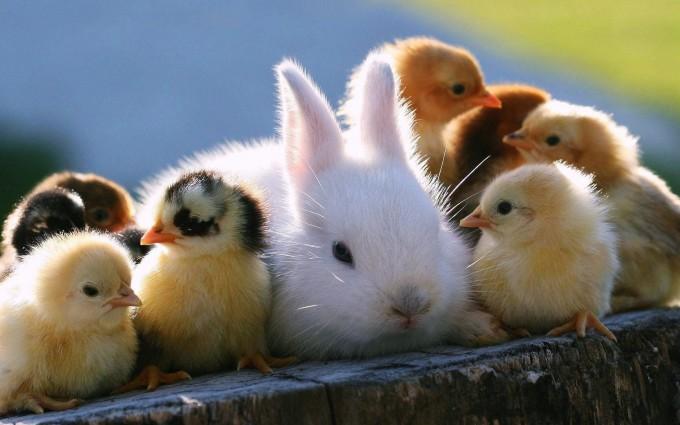 easter bunnies A2