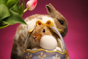 easter images bunny