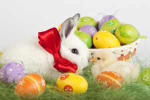 easter wallpapers bunny