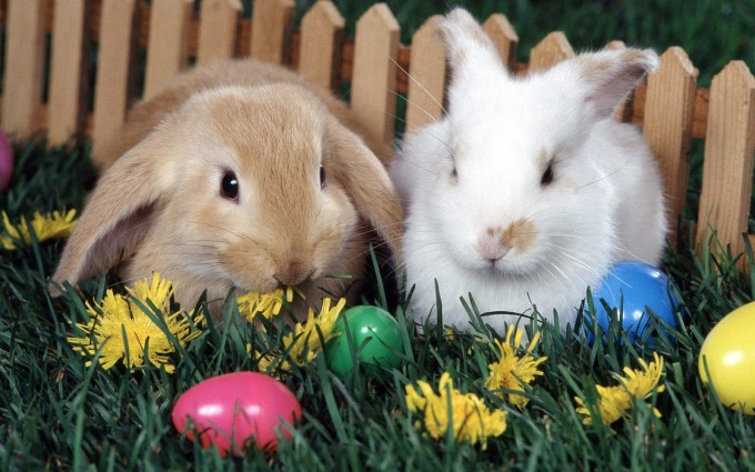 easter wallpapers bunny hd