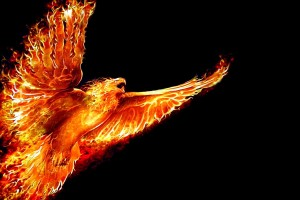 fire wallpaper bird