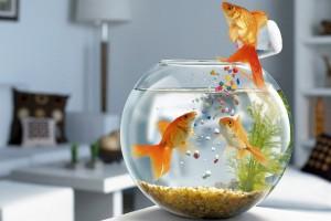 fish live wallpaper