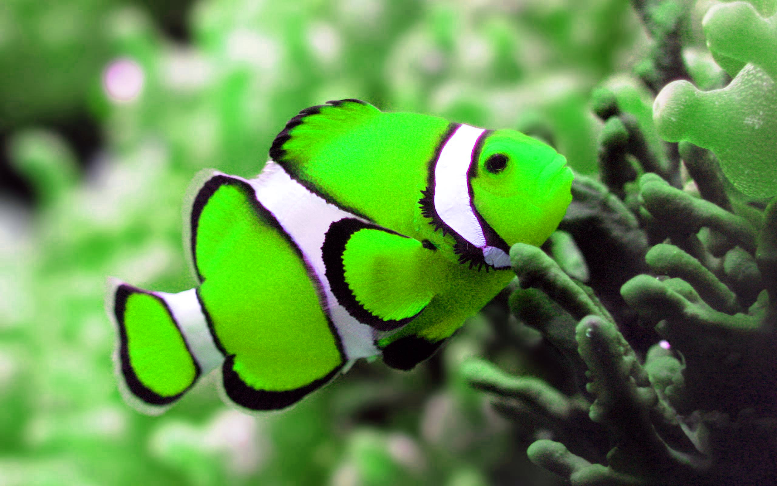 fish photo green
